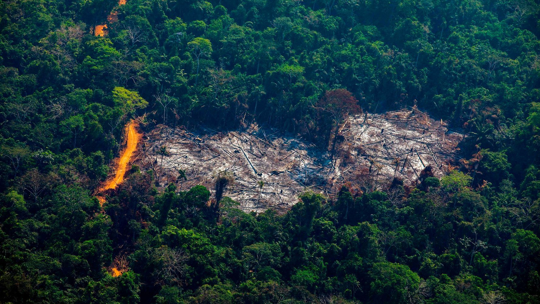 What Is Deforestation And How Big Of A Threat Is It To The Planet