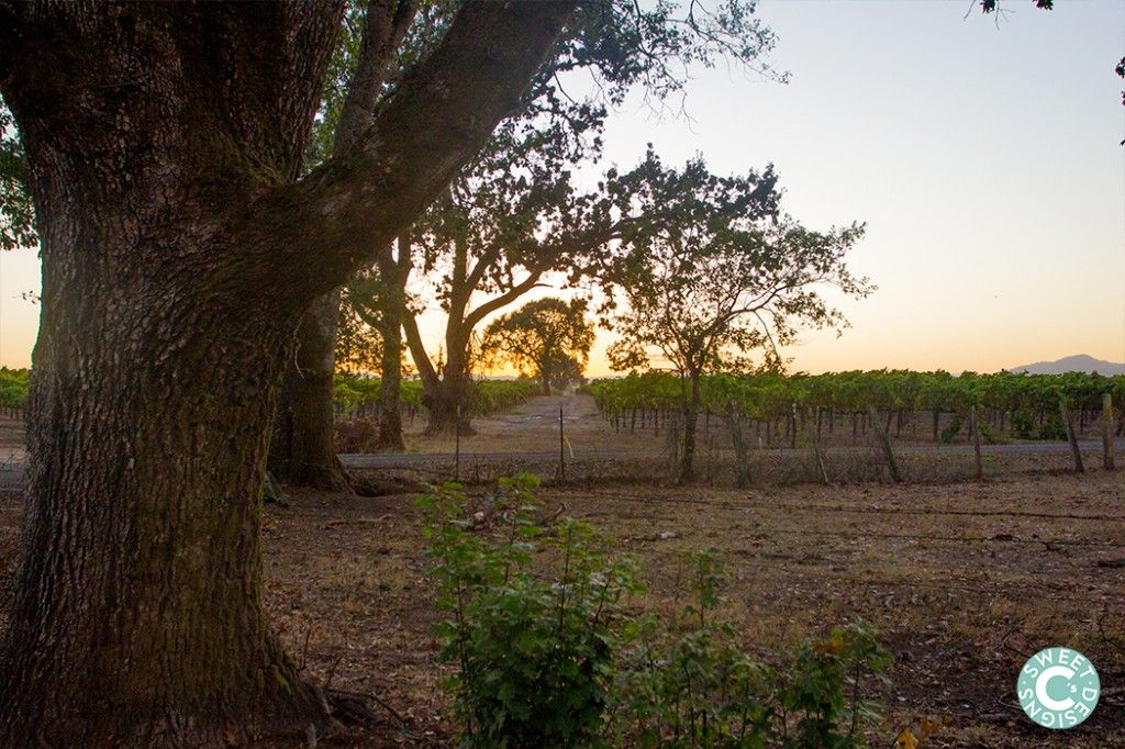 sunset in sonoma county ca wine country