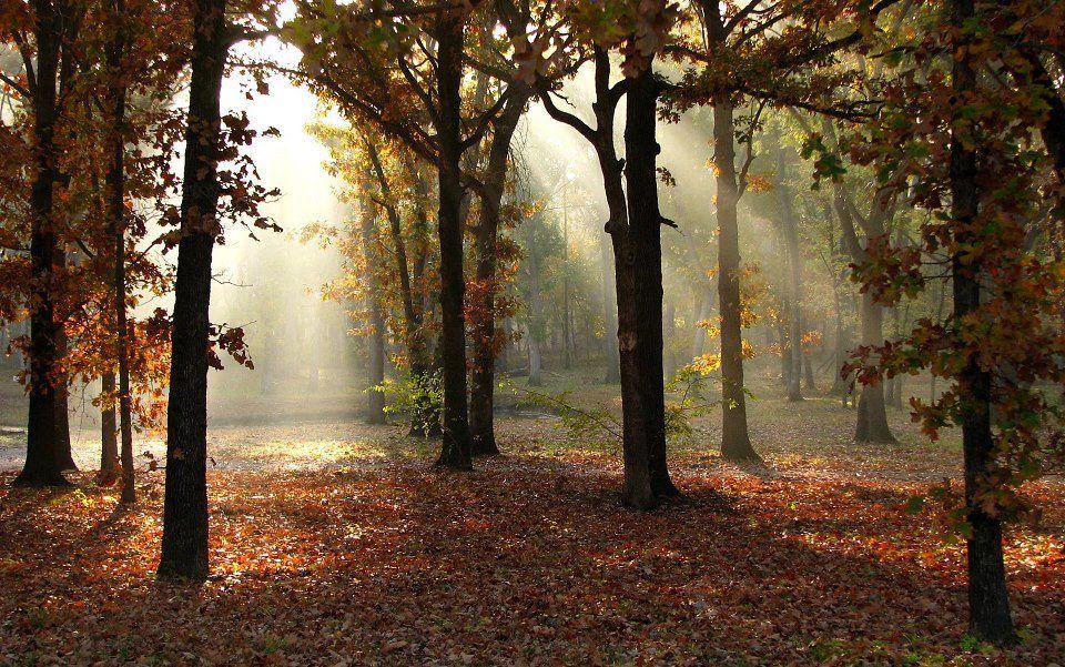 Beautiful foliage and serene trails