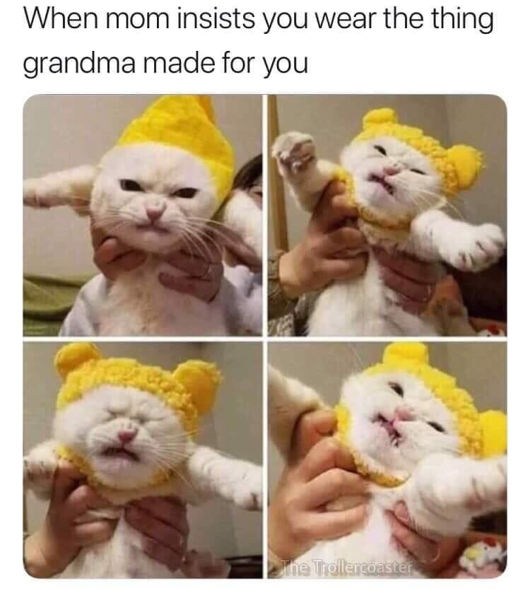 Lol So True Tap The Photo For More Catloverscommunity Funny Animal Memes Funny Cat Memes Animal Memes Funny Dogs
