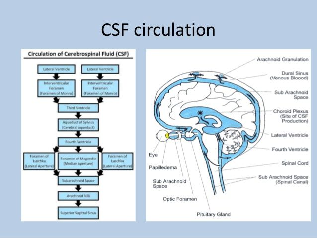 Csf Circulation Lumbar Puncture Cerebrospinal Fluid Spinal Fluid