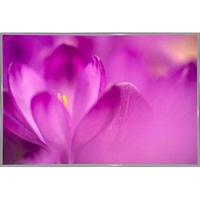 Ebern Designs 'Purple Flower Study' Photographic Print Format: White Metal Framed Paper