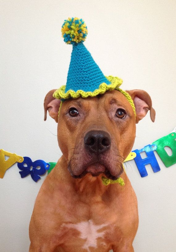 Dog Birthday Hat Party For Dogs Gotcha Day By TheBushelBasket