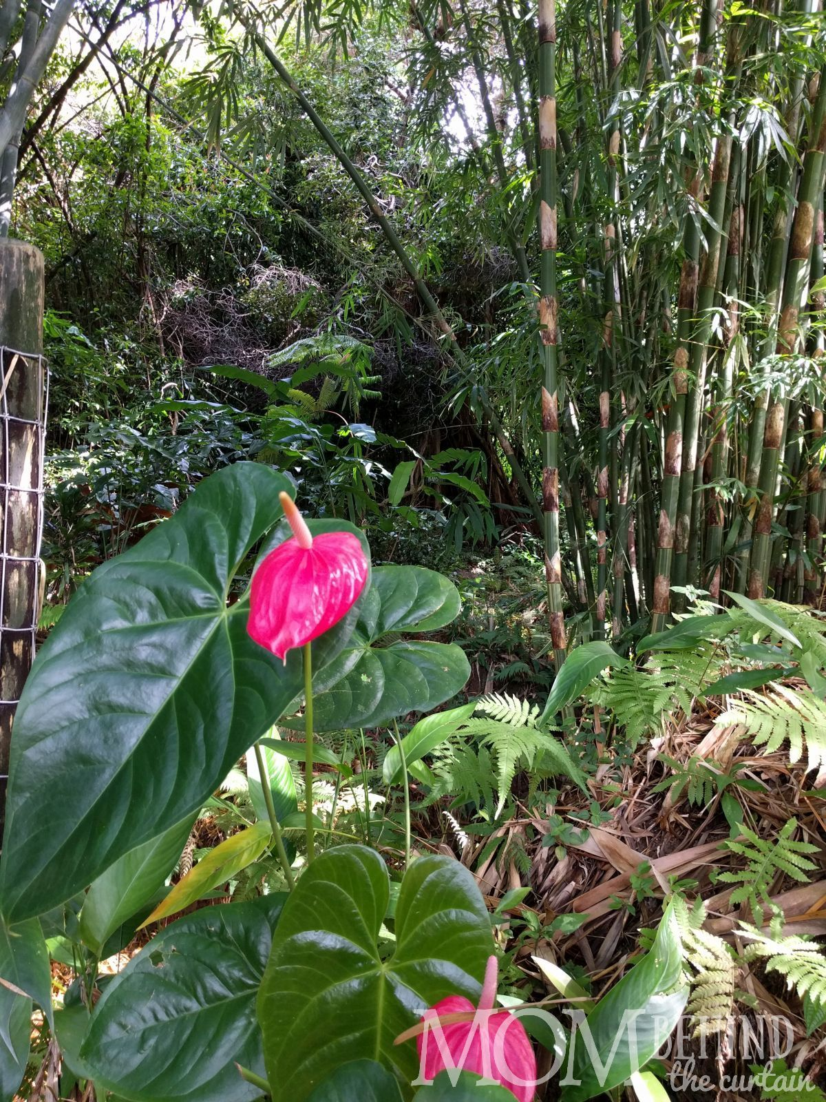 389bde056b2fcb3447372c9dbc3f369e - Hana Maui Botanical Gardens Hana Hi