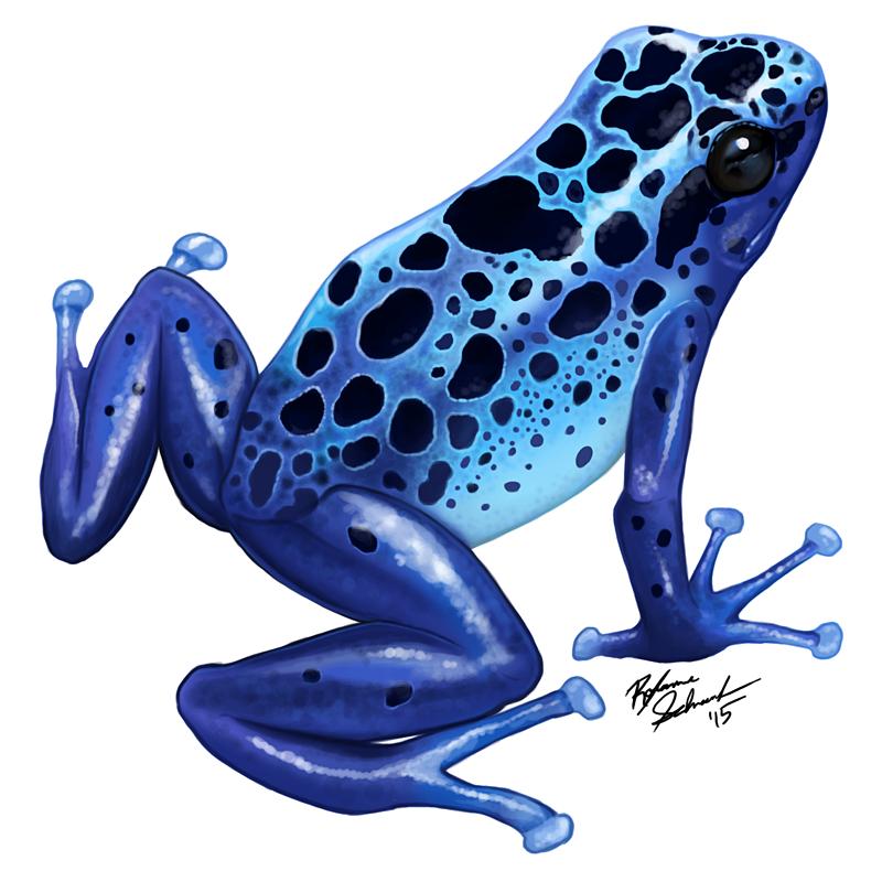 scientific illustration magpiefeathers blue poison