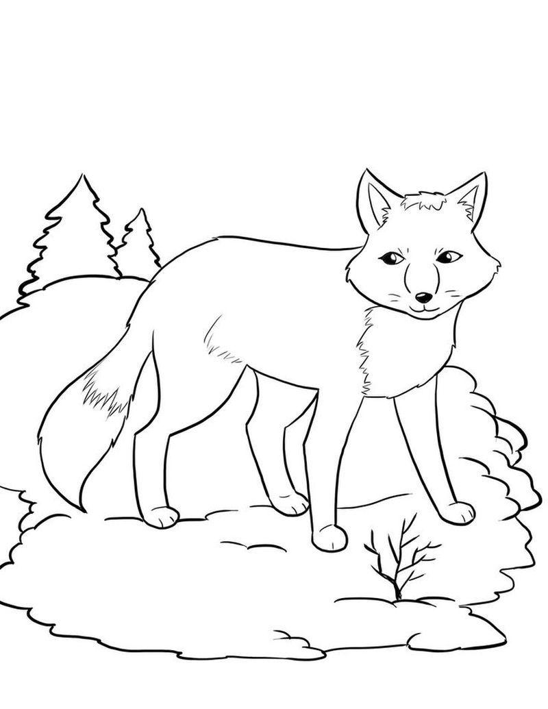 Animal Jam Artic Wolves Coloring Pages Free Arktika Warna Gambar [ 1035 x 800 Pixel ]