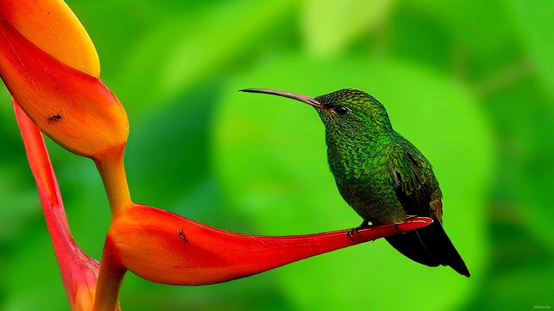 Dwnld Cute Little Bird Walpaper Free Fr Mobile: Humming Bird Hd Wallpapers 1080p