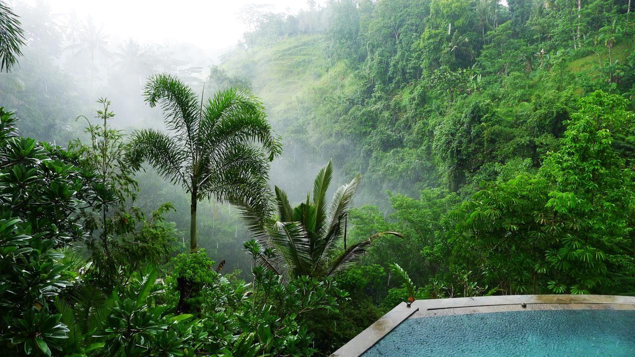 Villa Umah Shanti 3 Bedrooms Ubud Bali Swimmingpool Infinitypool Forest Ubud Villas Luxury Villa Ubud