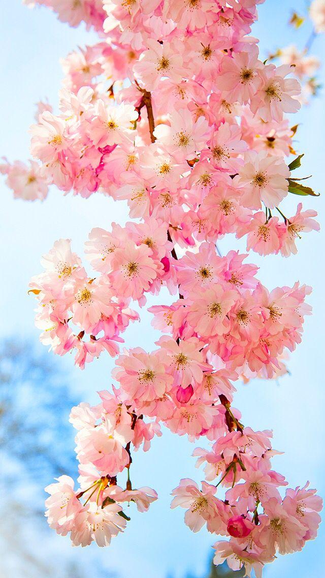 Pink flowers wallpapers Pinterest Flower, Wallpaper