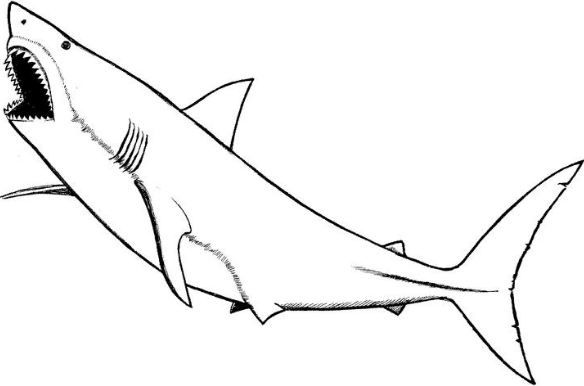 great white shark coloring page | Рыбы | Shark coloring pages ...