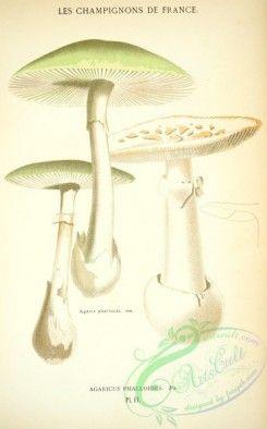 mushrooms-00241 - agaricus phalloides [2395x3851 ...