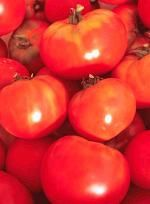Gardening Jones shares a few tips to help you get your homegrown tomatoes sooner. Yum!