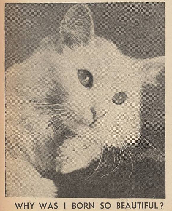 Good Morning by the Daily Mirror, England, May 5, 1944 - #1940s #1944 #animals #cats #daily #England #historic #history #mirror #photos #vintage