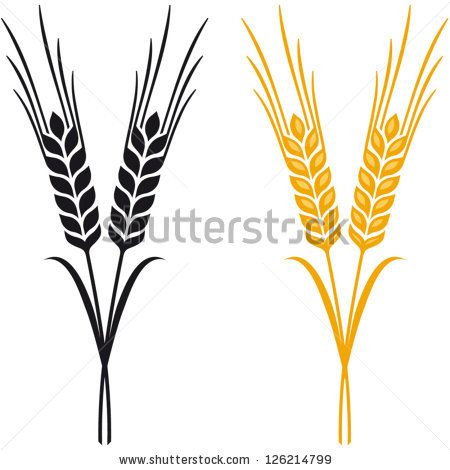 ears of wheat barley or rye vector visual graphic icons ideal for rh pinterest com barley vector eps wheat barley vector