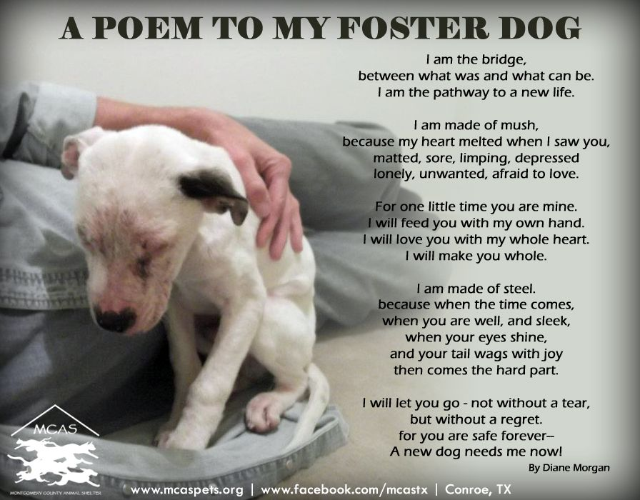 When you foster an animal, you save a life!