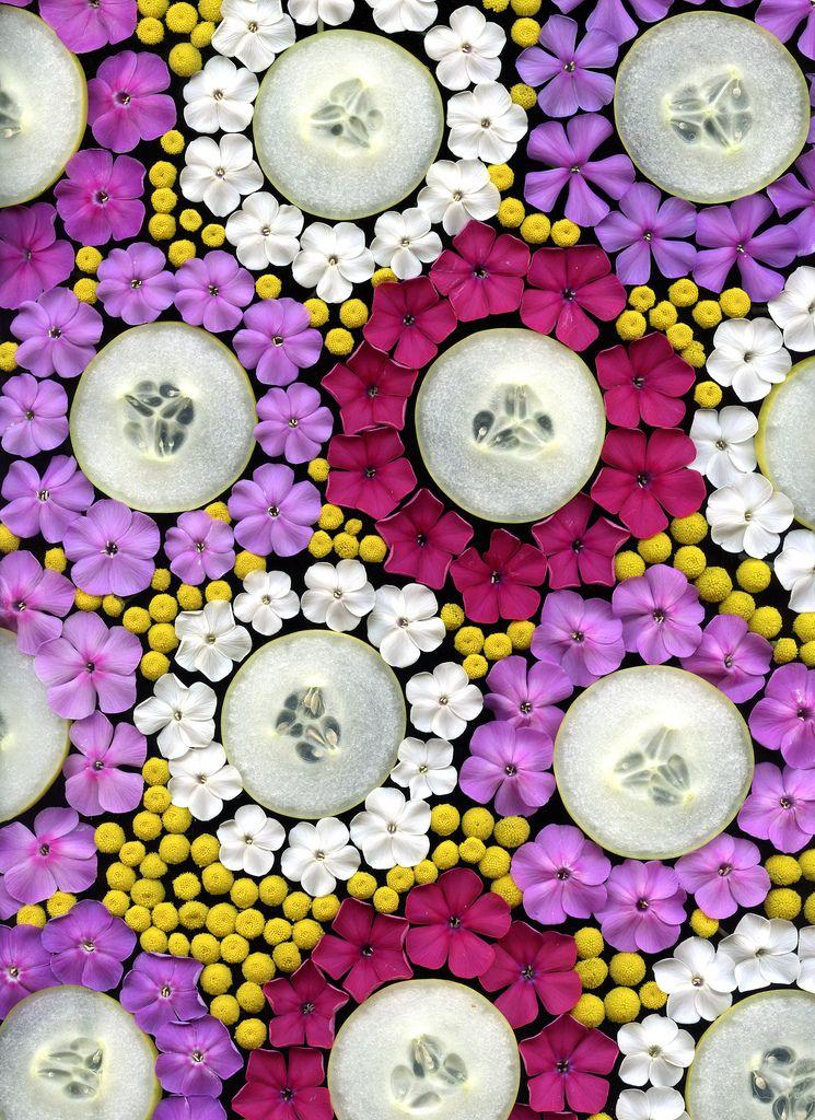 32556 Cucumis sativus, Phlox, Tanacetum vulgare | by horticultural art