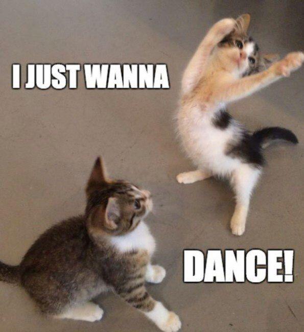 Funny Dance Meme Images : Nsp danny avidan i just want dance