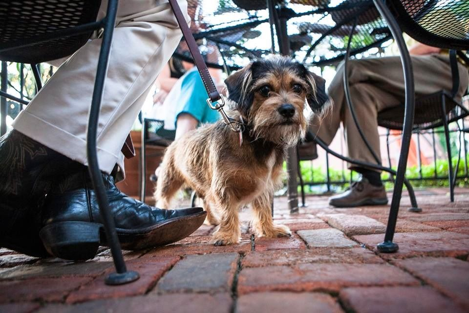 Houston Dog Friendly Restaurants Bars More Houstononthecheap Dog Friends Dogs Friendly