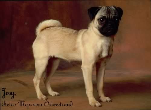 Retro Like Our Pug They Re Thin Retro Pugs Animals