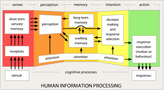 use appropriate information processing tools