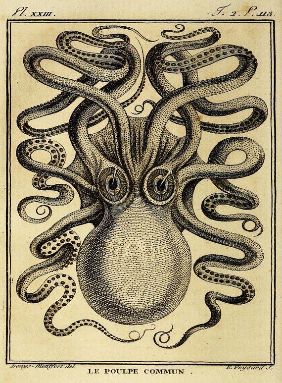 Kraken Octopus Art, Wild Eyed Octopus Print, Cephalopod Illustration ...