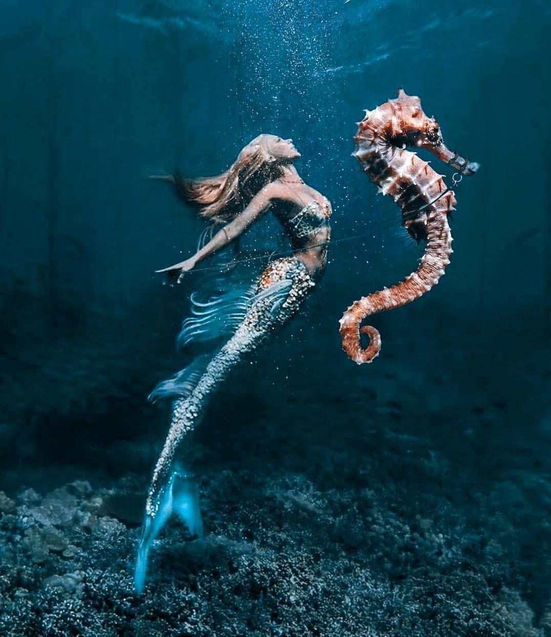"""Hannah Fraser on Instagram: """"-  Mermaid's Seahorse Original Mermaid photo by: @_jimward_ Model: @hannahmermaid  Digital seahorse art by: @art.side Decorative fins on my…"""" #mermaid"""