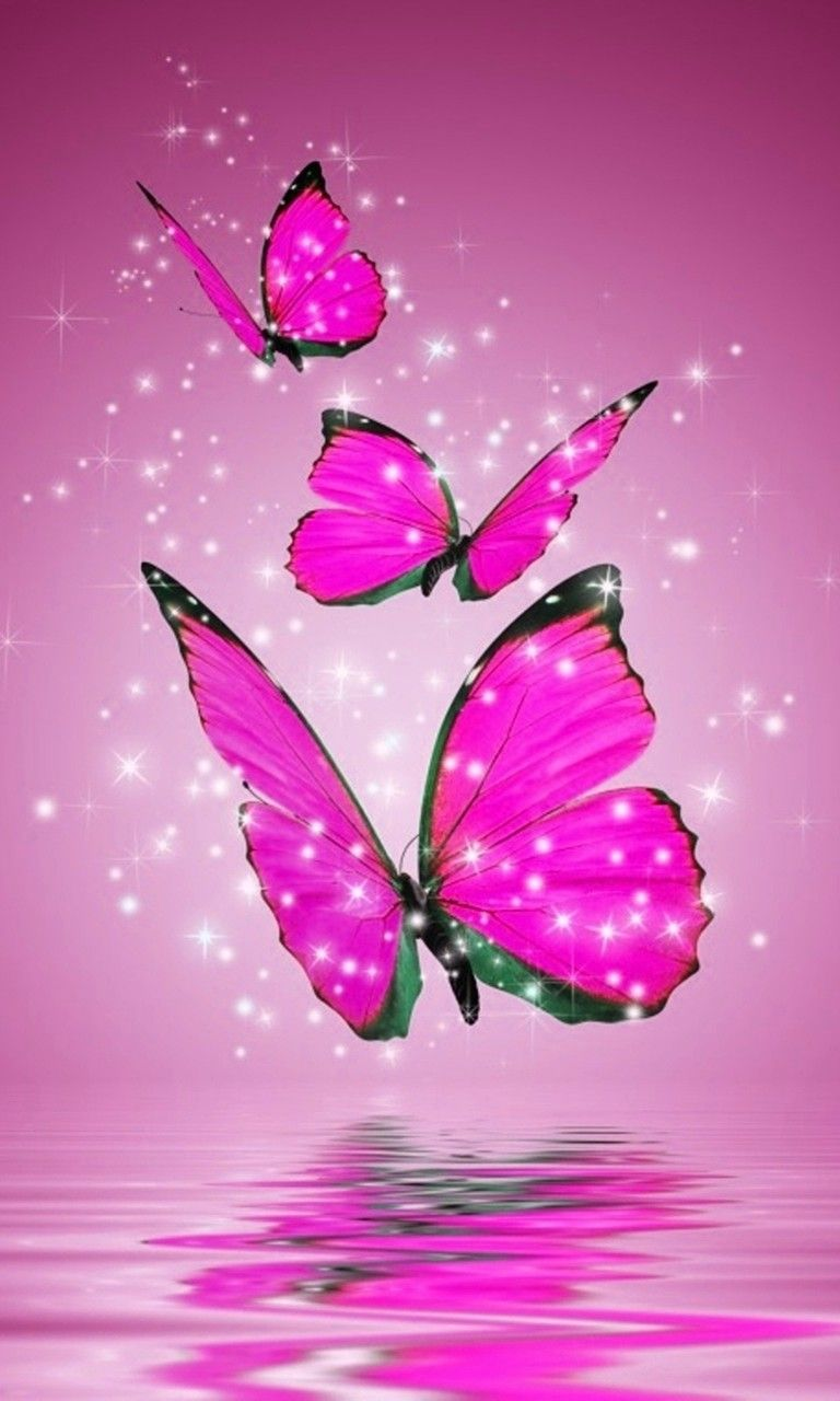 Pink And Black Butterfly Wallpapers