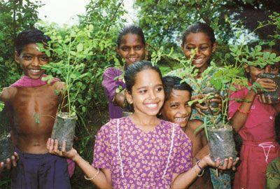 Moringa Tree Uses and Donations