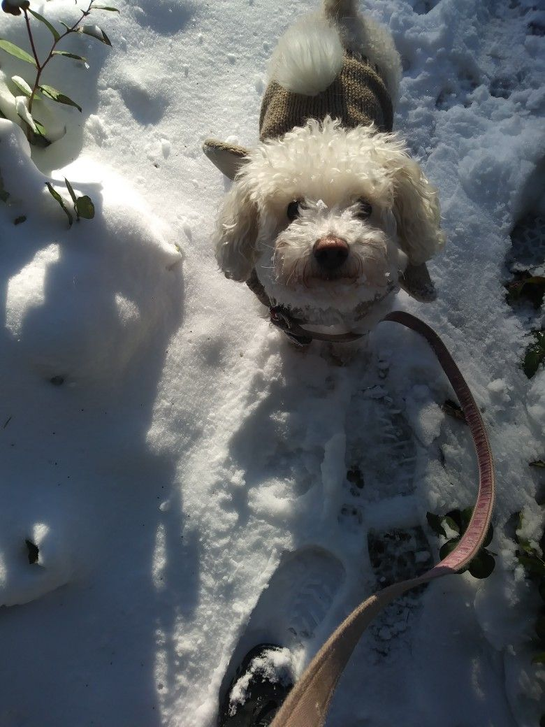 Nevada doesn't like the snow. (With images) Schnoodle