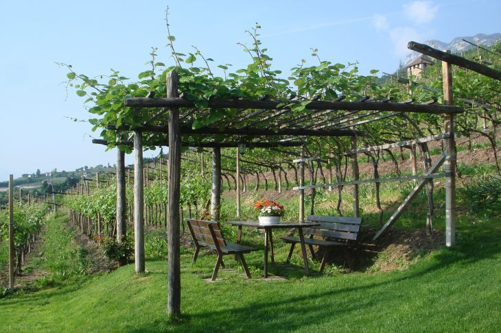 pergola mit wein green garden inspiration pinterest pergola wein und vor zaun. Black Bedroom Furniture Sets. Home Design Ideas