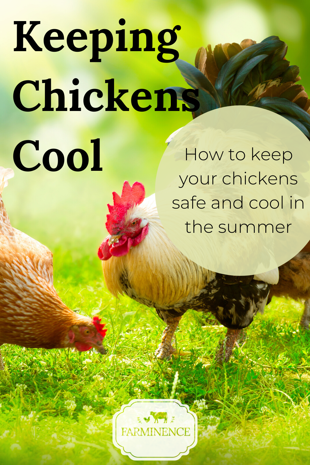 Keeping Chickens Cool in the Summer Tips to Safely Cool
