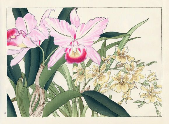 Tanigami Konan Western Flower Woodblock Prints