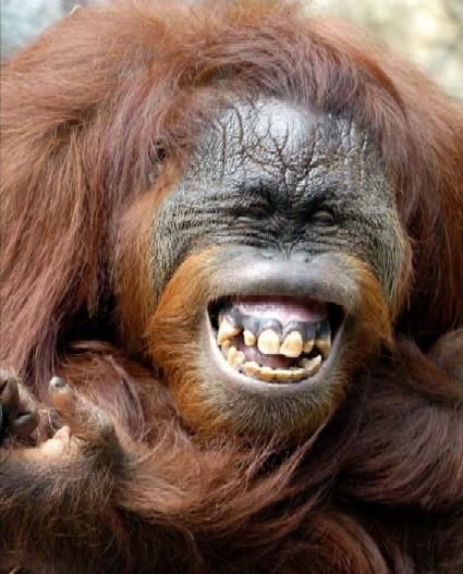 Pin By Patrick Abeels On Our Closest Cousins Smiling Animals Happy Animals Animals Beautiful