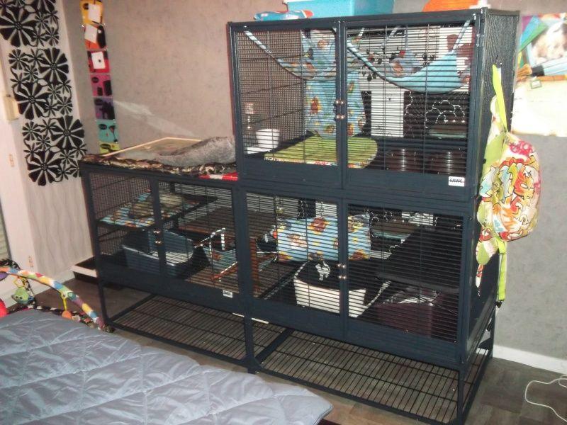 I Like This Idea Pet Home Tiny House Suite