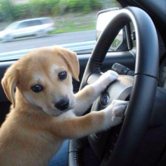 He can drive me around!