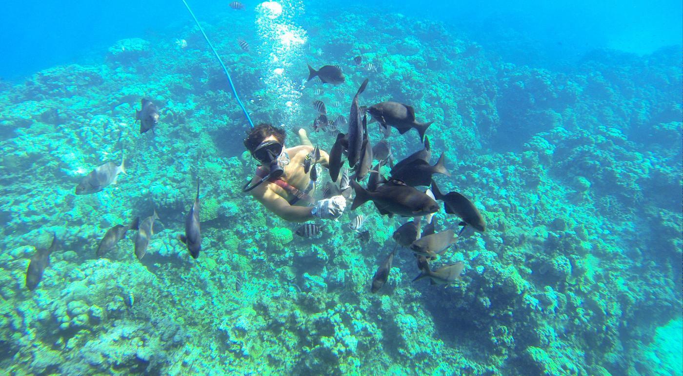 Explore The Beauty Of Caribbean: SUNKEN SHIP & REEF SNORKEL