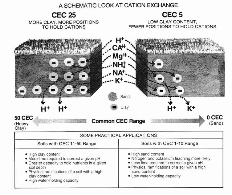 Understanding Cec Buffer Soil Ph Percent Saturation Soil Ph Soil Soil Texture