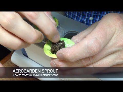Aerogarden Diy How To Start Your Own Lettuce Seeds 400 x 300
