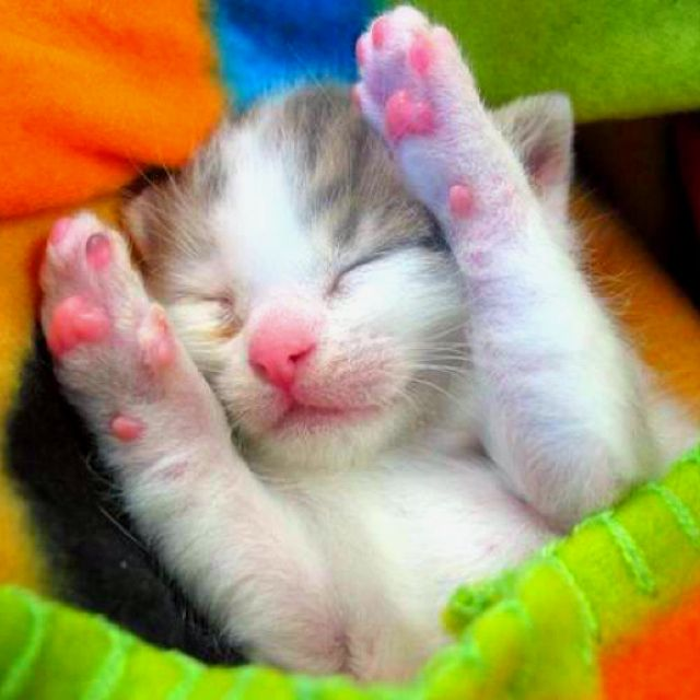 Kittens Are Born With Their Eyes Shut They Open Them In About 6 Days Take A Look Around And Close Them Again Fo Newborn Kittens Kittens Cutest Baby Kittens