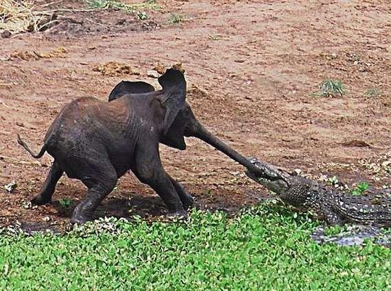 "Rudyard Kipling, ""How the Elephant Got His Snout"""