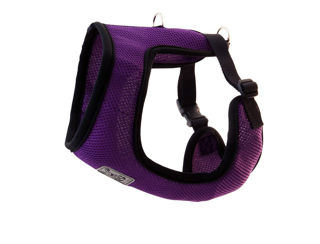 I love this! Cirque Harness Puppies, Dog accessories