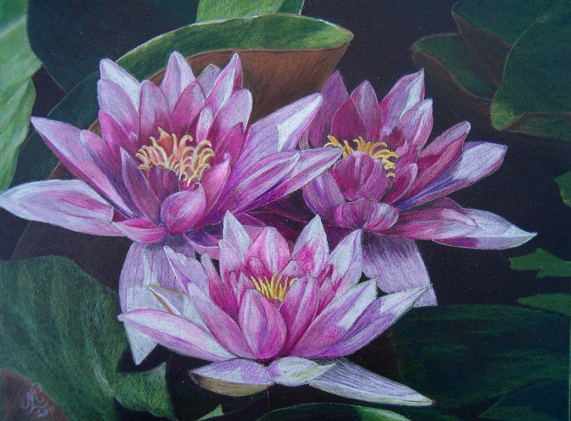 Pics For > Colour Pencil Sketch Of Flowers Color pencil