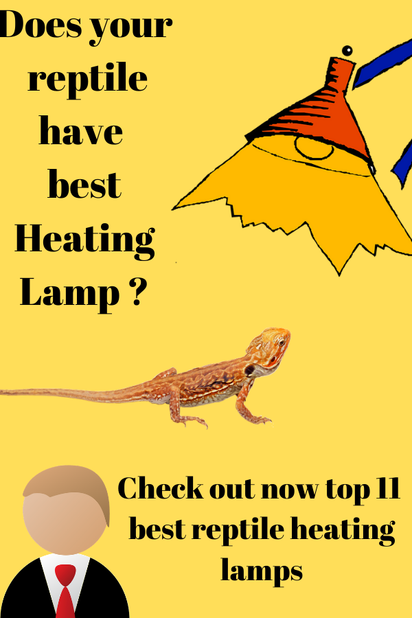 Check Out Now Top 11 Best Reptile Heating Lamps Reptile Heating