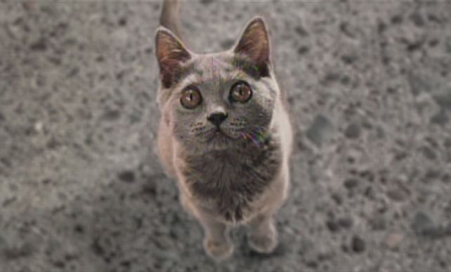Cats Dogs 2001 Cinema Cats Cats Dog Cat Russian Blue