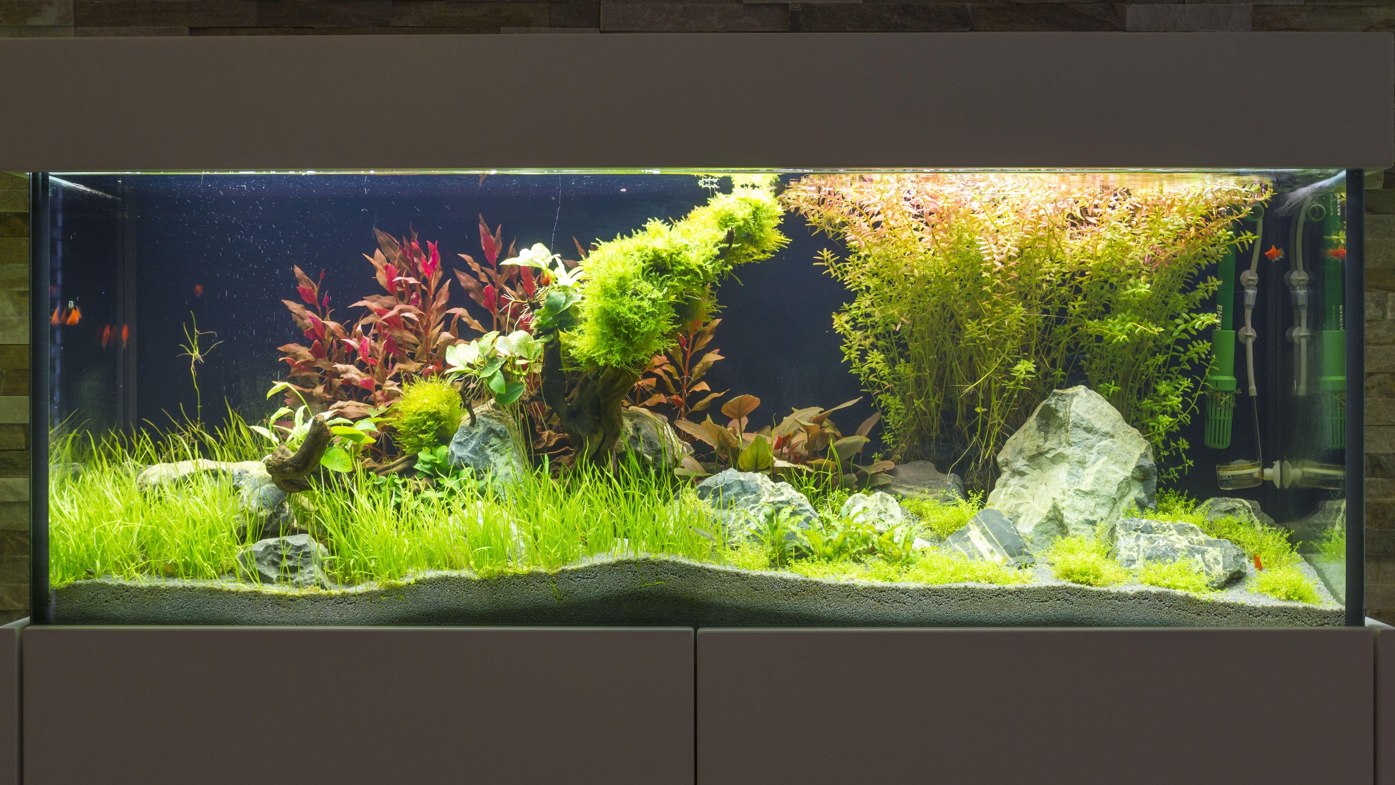 aquarium sideboard aquarium s wasseraquarium aquaristik designaquarium aquaristik. Black Bedroom Furniture Sets. Home Design Ideas