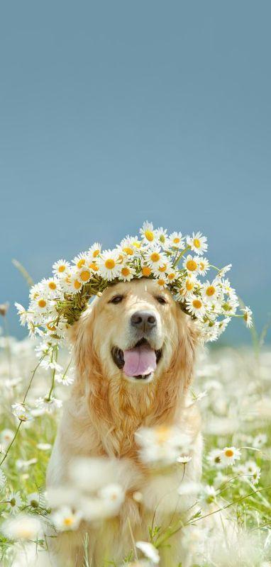 Bohemian dog