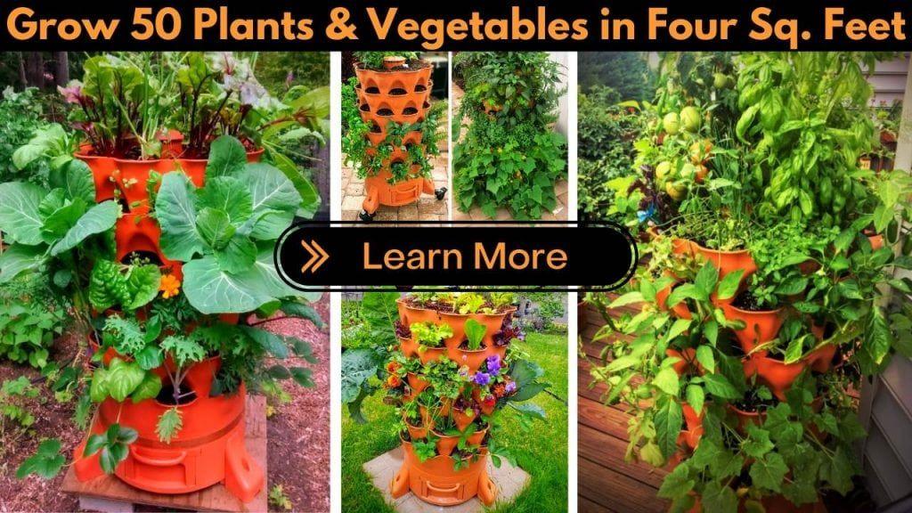 Why You Should Use White Vinegar In Your Garden | Slick Garden