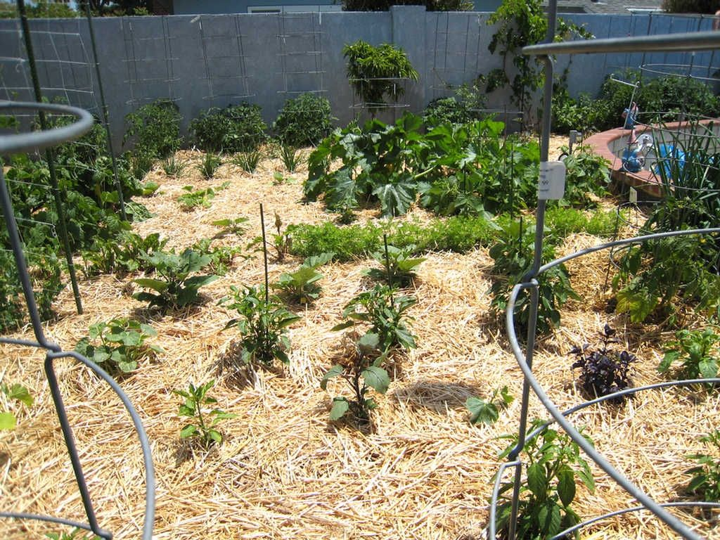 vegetable garden mulch ideas