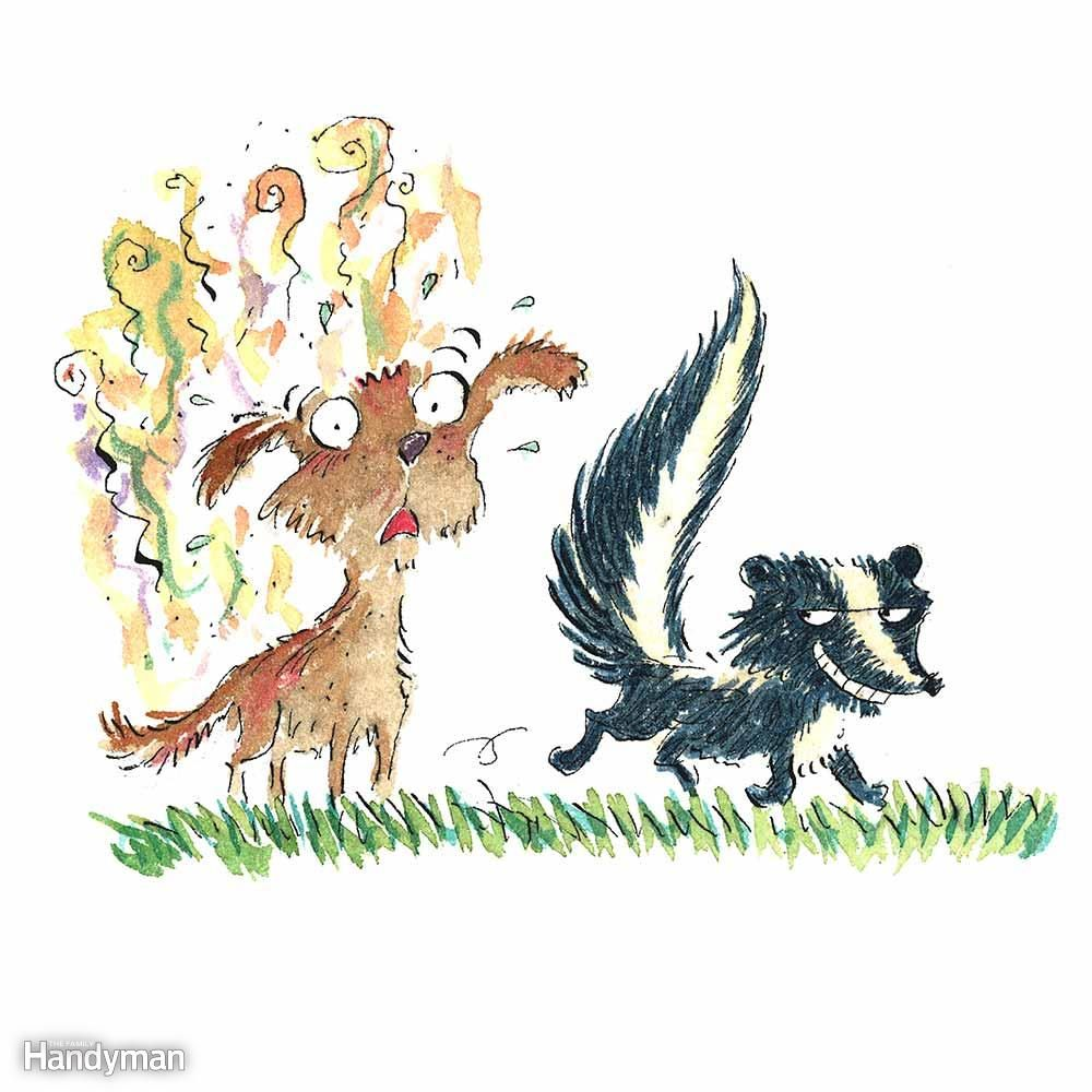 Bad Smell in the House Skunk spray, Skunk smell, Smelly