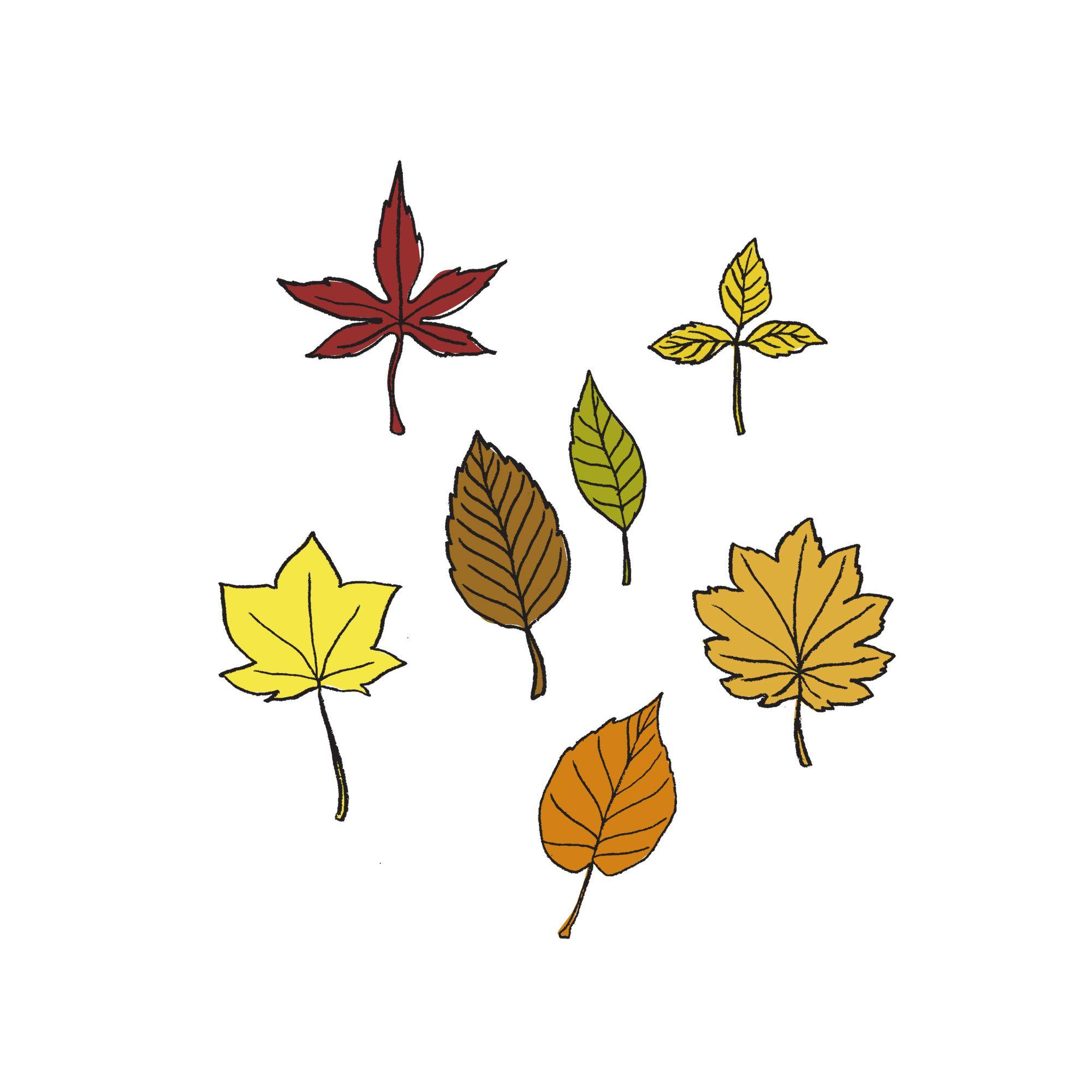 イラスト鉛筆落ち葉leaf Original Items 落ち葉鉛筆イラスト